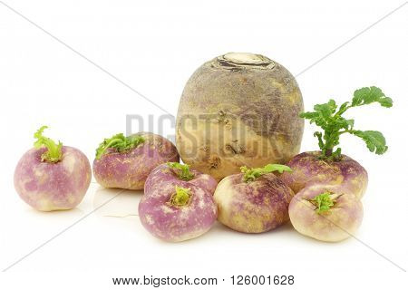 freshly harvested spring turnips (Brassica rapa) and a common turnip on a white background