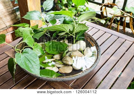 Potted Plants With Stagnant Water Potentially Become Mosquito Breeding Ground
