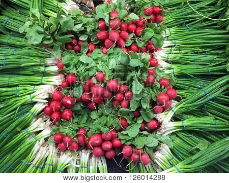 Several bunches of radishes make a radish vegetable background