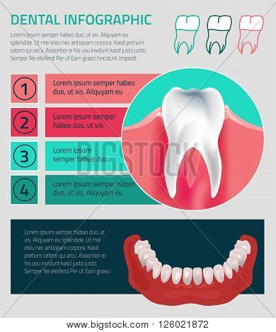 Human teeth dental infographic. vector illustration with Lower jow teeth. Medical image in green, pink and dark blue colors on a background useful for poster, leaflet or brochure graphic design.