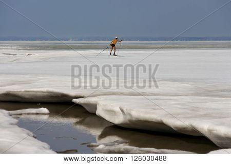 Berdsk Novosibirsk Oblast Siberia Ob River Russia - April 17 2016: a skier runs along the ice of the Ob River