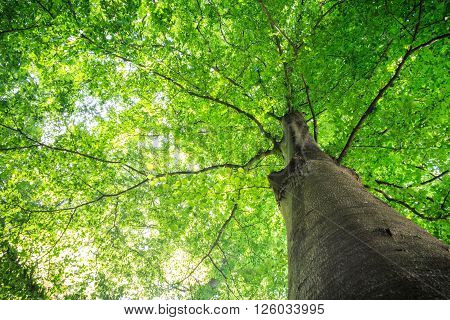 Summer Tree With Green Leaves.
