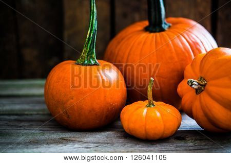 Image of Colorful Pumpkins On Wooden Background