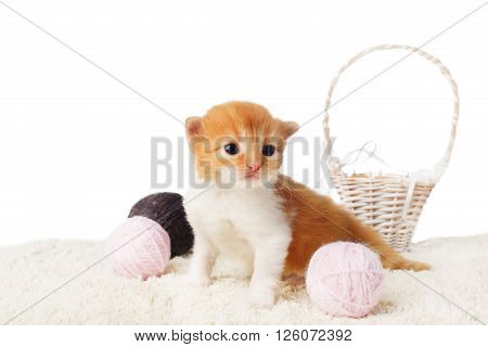 Red orange kitten. Cute red kitten with pink and grey woolen yarn balls and basket isolated at white background. Adorable pet. Small heartwarming orange kitten. Little cat. Pussycat isolated. High key