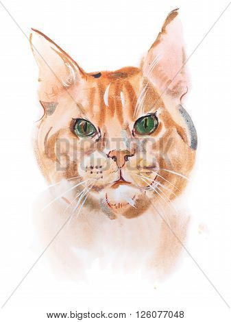 watercolor painting, red-headed curious watching furry cat aquarelle drawing.