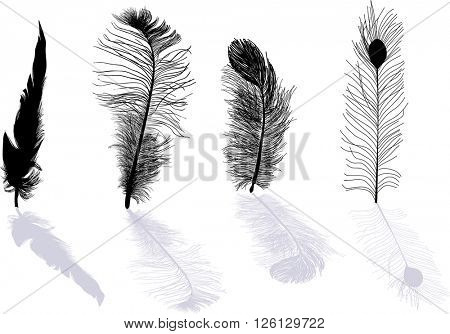 illustration with four feathers isolated on white background