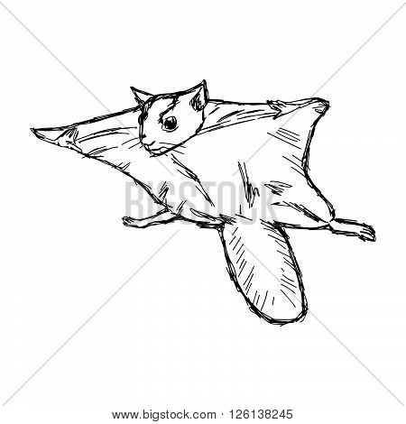 illustration vector hand draw doodles of flying squirrel or Pteromyini or Petauristini isolated on white background