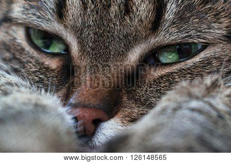 An emotional portrait of a sad cat.