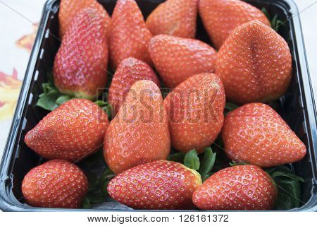 freshly picked fruit: fresh and ripe seasonal strawberries