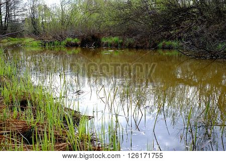River Wetlands, Water