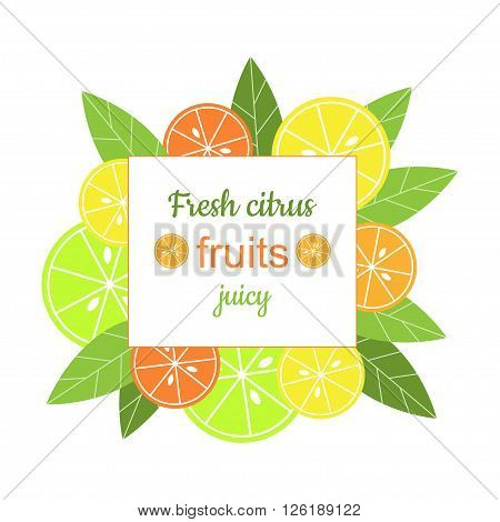 Vector square frame with citrus. Banner with stylized citrus fruits and leaves. Grapefruit, lime, lemon and orange. Citrus mix isolated on white background