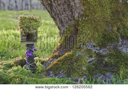 /Small fairy house with moss covered roof and purple flowers next to mossy tree trunk/Fairy house with moss next to Tree Trunk/