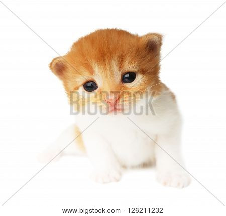 Cute orange red and white kitten. Cute sad kitten 2 weeks old, creeping isolated at white background. Adorable pet. Small heartwarming kitten. Little cat. Closeup isolated. High key