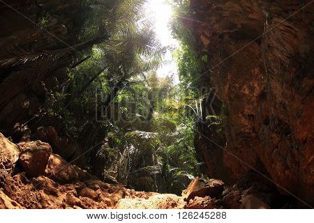 closeup of sunbeam at tropical forest landscape
