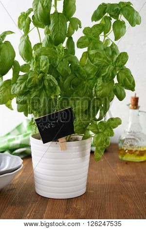 Basil in a pot with label on a rustic table