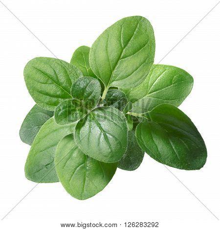 Oregano (origanum Vulgare) Leaves