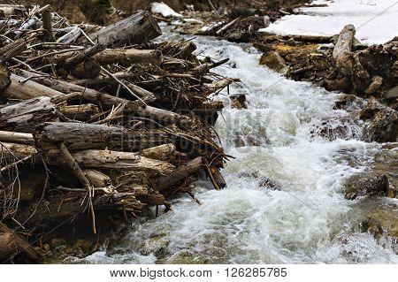 mountain beaver damn habitat with a stream flowing through
