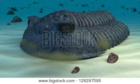 Prehistoric cambric trilobite in sand blue ocean