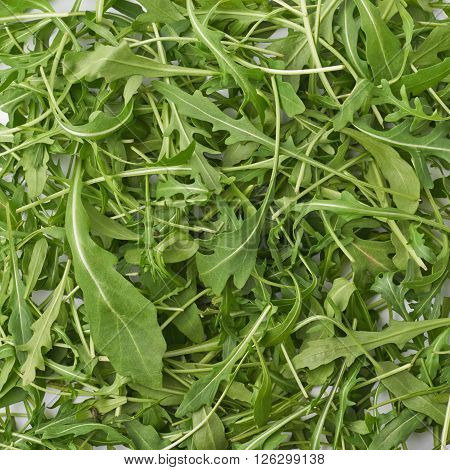 Surface covered with eruca sativa rucola arugula fresh green rocket salad leaves as a background composition texture