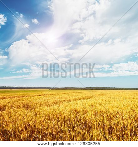 Beautiful view of the field and the blue sky on a sunny day. Dramatic and picturesque scene. Location place: Ukraine, Europe. Artistic picture. Beauty world. Soft filter effect.