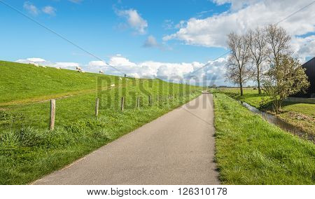 Winding narrow country road along a dike in the Netherlands. It's a sunny day at the beginning of spring and on the of the the embankment are grazing sheep with their lambs.