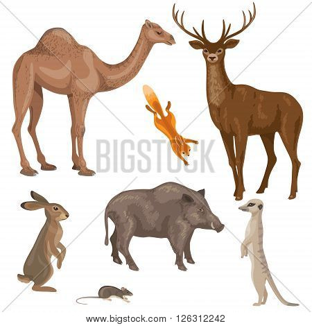 Set of different mammals animals isolated on white. Animals of forest desert and steppe zones. Simplified images of wild animals.