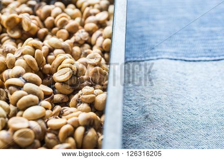 Coffee series : Coffee beans excreted by the civet