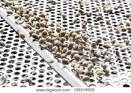 Coffee series : Closeup of coffee beans on grader machine