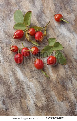Wild rose fruits with foliage over painted textile background. Overhead view.
