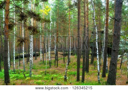 Forest landscape with ancient stone boulders between the trees at Chashkovskoe stone settlement in Southern Urals Russia. Soft focus processing