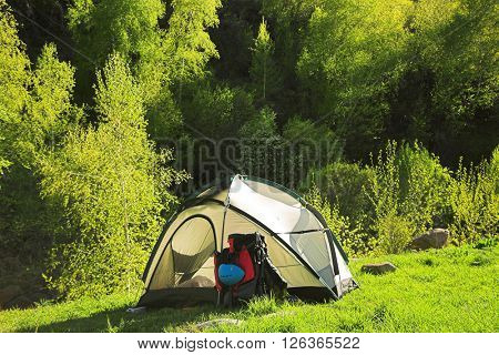 Camping near the forest  in summer day