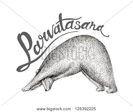 Vector illustration of fun a bear isolated on vintage background. Print posture of morning practice pranayama asana pose yoga spirit graphic character.Parvatasana