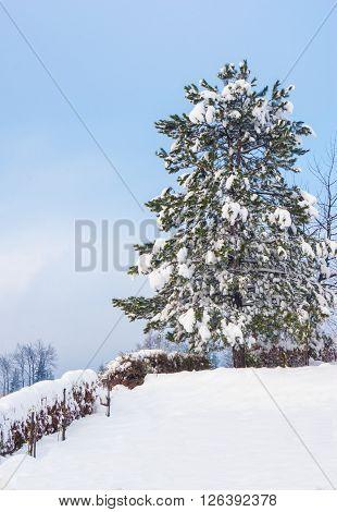 Cold Winter Season Beautiful Day