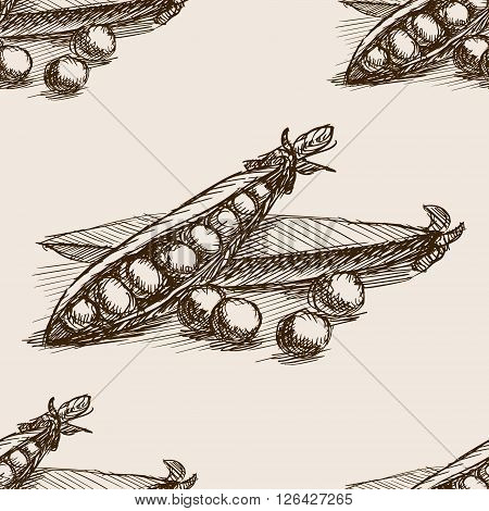 Peas sketch style seamless pattern vector illustration. Old engraving imitation. Peas hand drawn sketch imitation