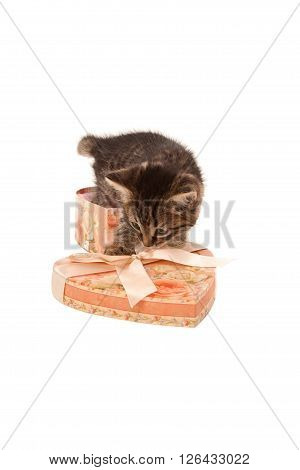 Funny kitten in heart-shaped box isolated on white