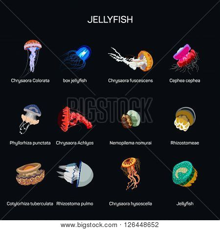 Jellyfish vector set in flat style design. Different kind of underwater life species icons collection. Isolated on white background. poster