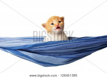 Red kitten in a hammock. Cute orange kitten in a blue hammock having rest, relax isolated at white background. Adorable sad pet. Small heartwarming kitten. Little cat. Animal isolated. High key