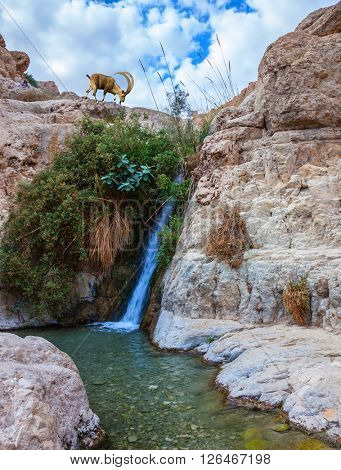 Beautiful waterfall and rapid creek with clear water. The national park Ein Gedi, Israel