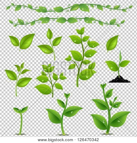 Green Leaves And Plants Set, Isolated on Transparent Background