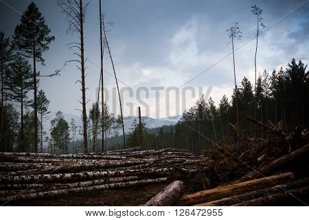 Area of chopping and destruction of the forest