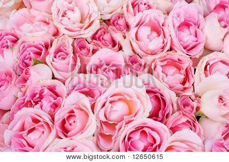 grote bos van meerdere roze rozen van boven, van