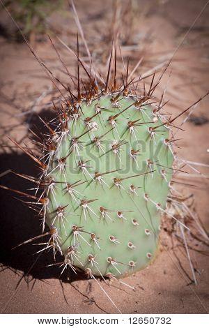 Cactus In Desert Sand