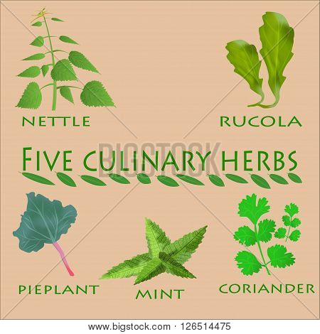 culinary herbs set. Culinary herbs isolated. Culinary herbs fresh collecton. Culinary herbs background. Culinary herbs illustration. Culinary herbs element. Culinary herbs ingredient set