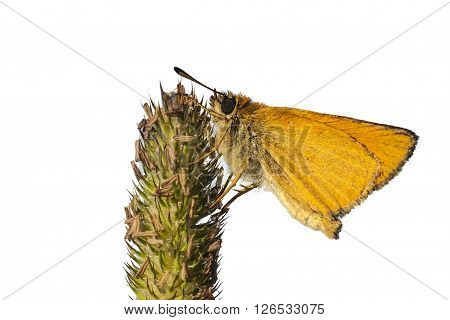 Yellow butterfly on white closeup clipping path