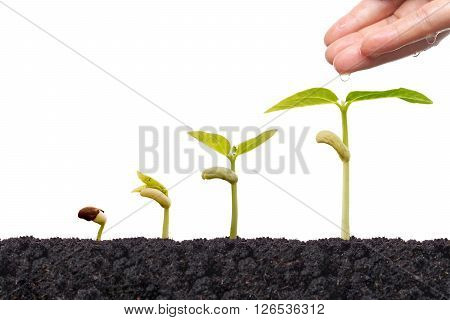 Agriculture - Nurturing baby bean plats seedling in germination sequence isolated