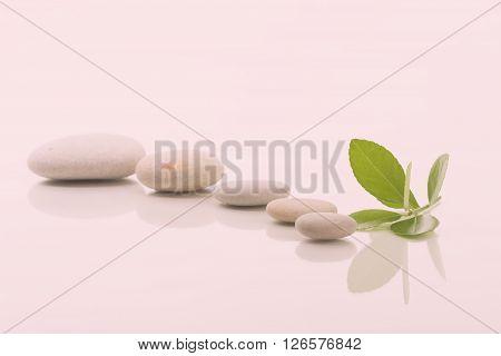 Zen Stones And Green Leaf