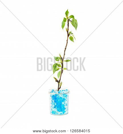 green plant growing in hydrogel soil isolated on white background