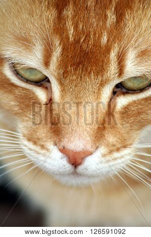 Garfield Ginger color cat kitten whiskers green stripes nose beautiful eyes smile good animal character kind