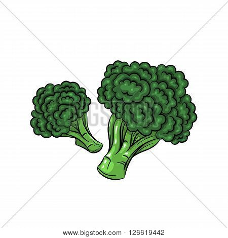 Vector broccoli illustration. Broccoli isolated on white background. Vector sketch hand drawn - stock vector