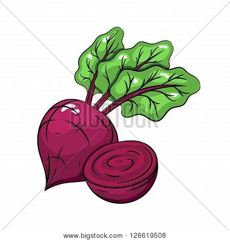 Vector beetroot illustration. Slice of beetroot, beetroot isolated on white background. Vector sketch hand drawn - stock vector